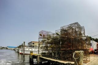 Maryland crab traps