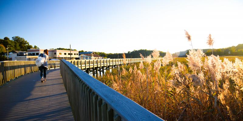 Railway Trail, Chesapeake Beach